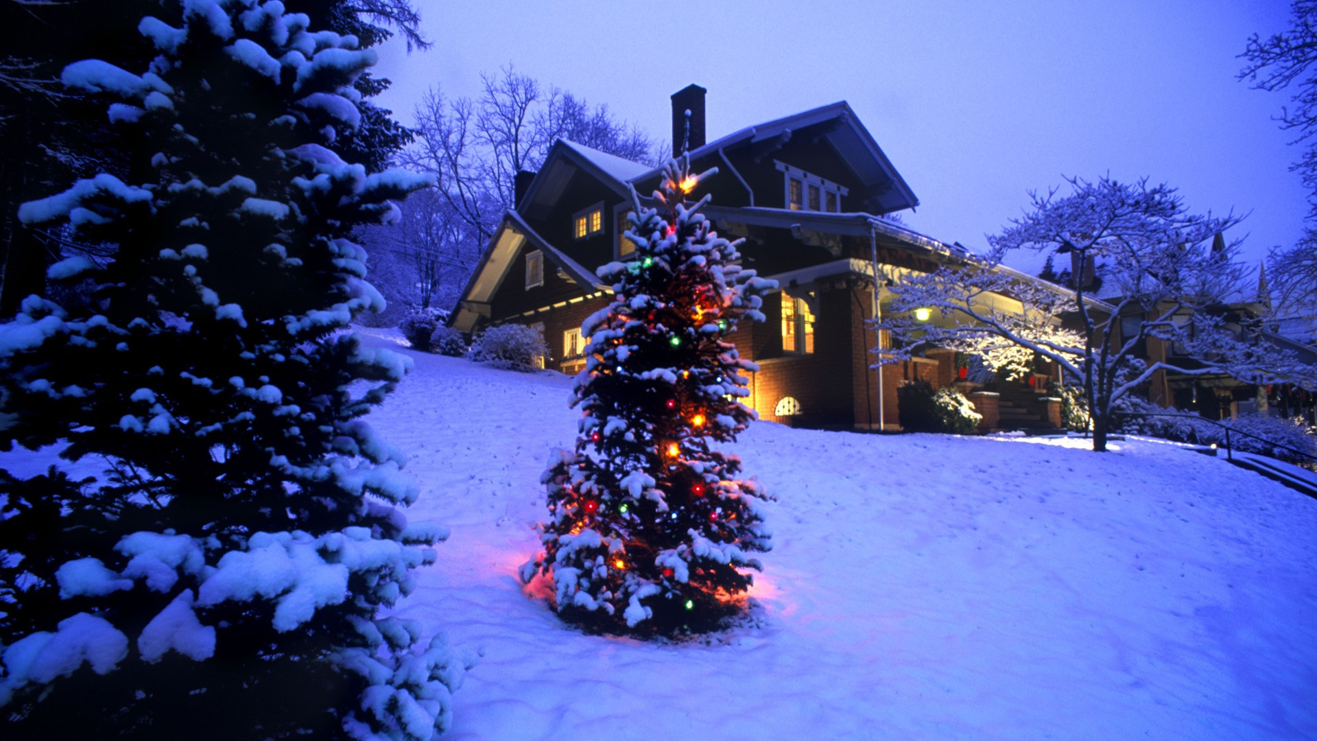 Beautiful Christmas Tree Wallpapers (8)