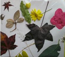 No Glue  Fall Nature Collage