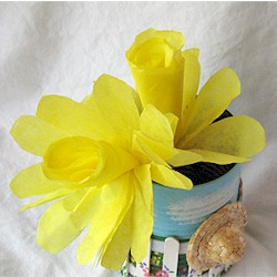 Image of Coffee Filter Daffodil