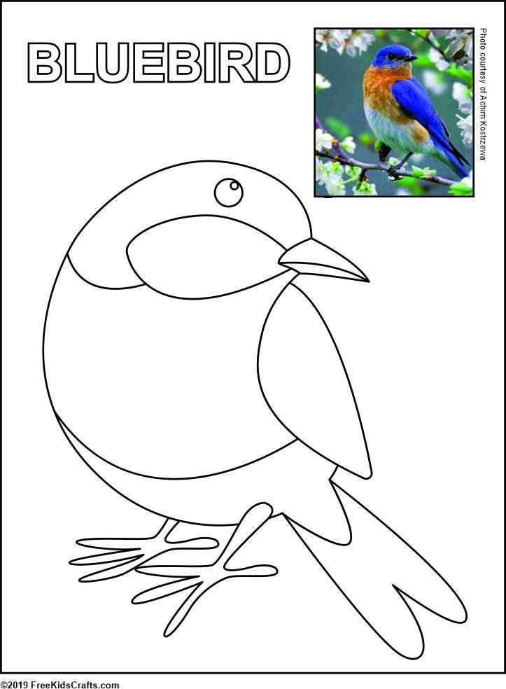 This is an image of Printable Bird with regard to free printable