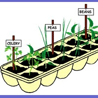 Seedling Pot