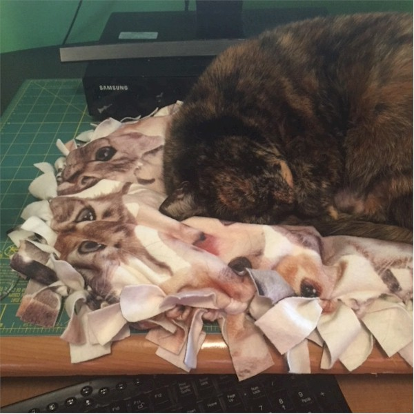 Image of Cat Pillow Project