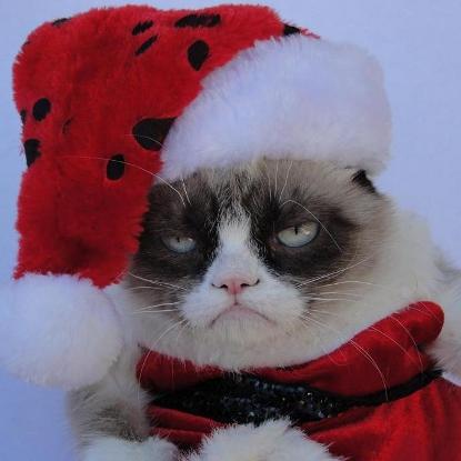 Grumpy cat as Christmas