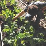 freemans_organic_farm_6