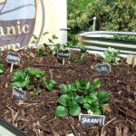 herbs sprouts garden