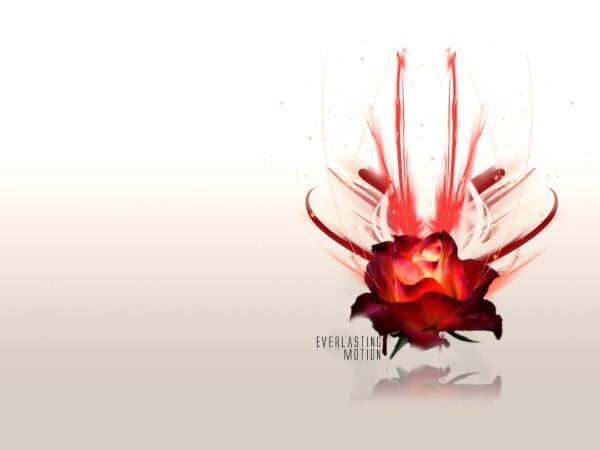 Розы для любимой обои для рабочего стола, картинки Розы ...
