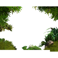 Download Jungle Free PNG Photo Images And Clipart FreePNGImg