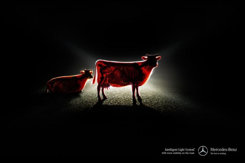 cow-xray-mb