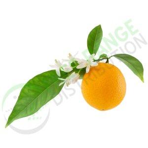 Citrus Aurantium - Bitter Orange