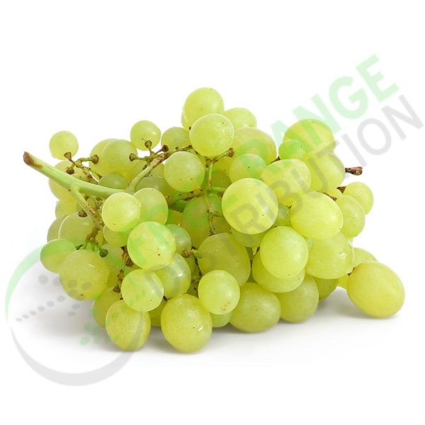 Grape Seed Extract Grapes