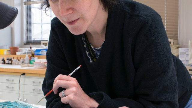 conservator holding small brush examining painted ceramic object