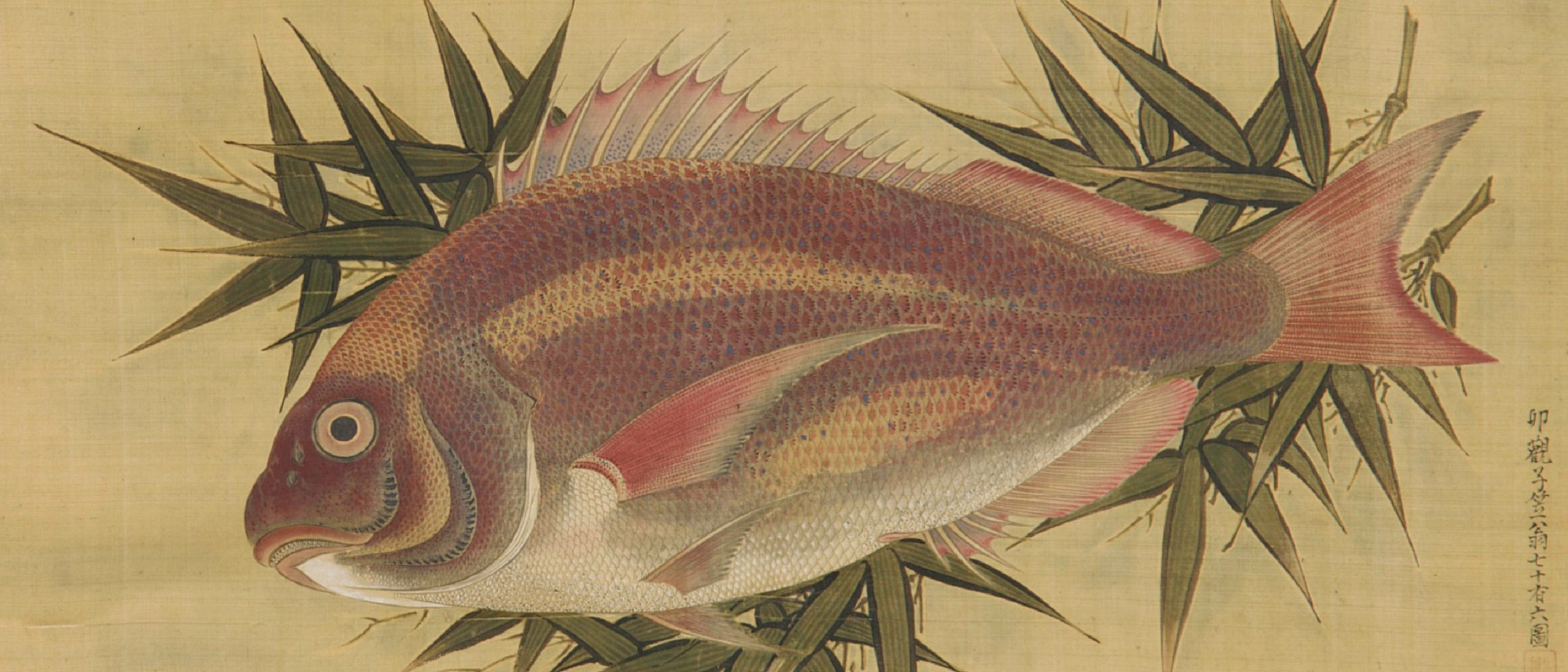 Detail image, Red Sea Bream (Tai) on Bamboo Leaves by Ogawa Ritsu­ (1663–1747), Japan, Edo period, 1738, Hanging scroll; ink, color, and gold on silk, Gift of Charles Lang Freer, F1897.30