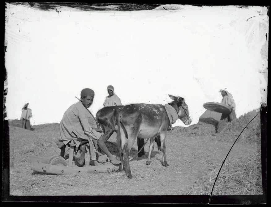 Sevruguin, Antoin,; b&w ; 11.1 cm. x 8.5 cm.; Myron Bement Smith Collection: Antoin Sevruguin Photographs. Freer Gallery of Art and Arthur M. Sackler Gallery Archives. Smithsonian Institution, Washington D.C. Gift of Katherine Dennis Smith, 1973-1985