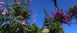 Magenta flowers against a blue sky