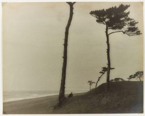 sepia toned image of trees on a beach