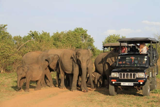 Photo of elephants in the national park