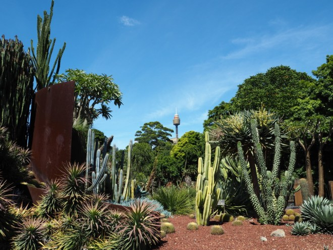 Cactus gardens in the Royal Botanic Gardens