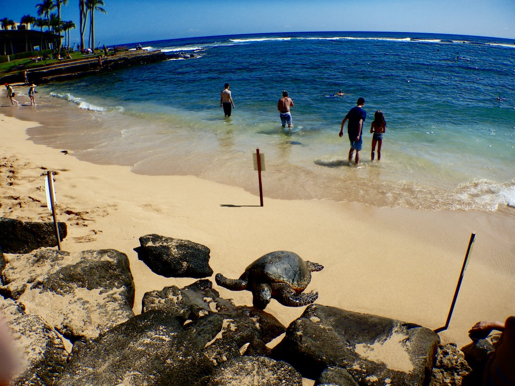 Sea turtle on Lawai Beach