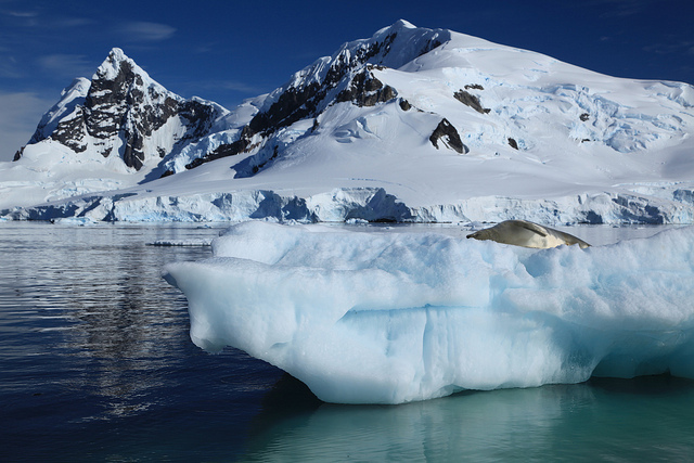 Iceberg with Crabeater Seal in Paradise Harbour, Antarctica. Photo by Liam Quinn (Flickr)