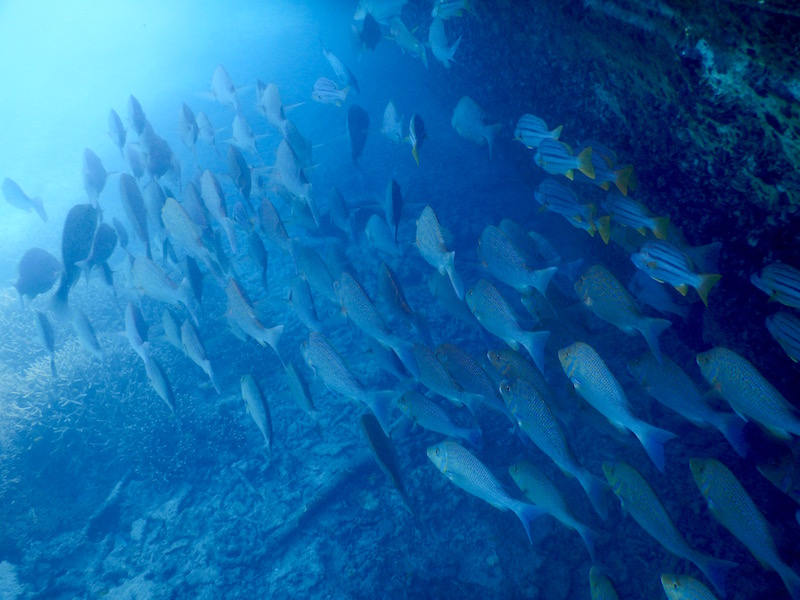 Many fish used to hang out by the wreck every morning!