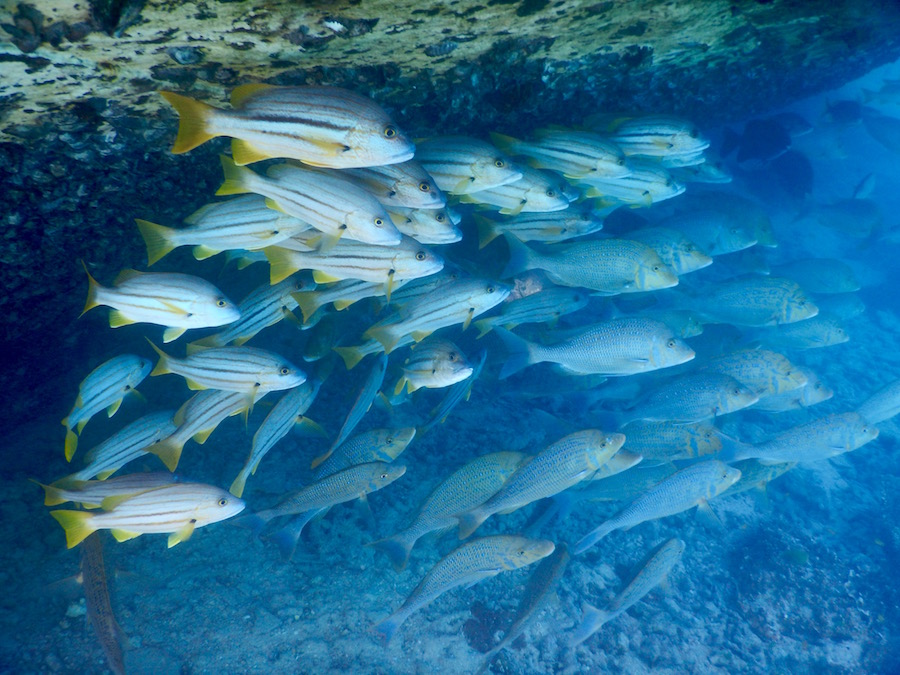 School of fish by the wreck.