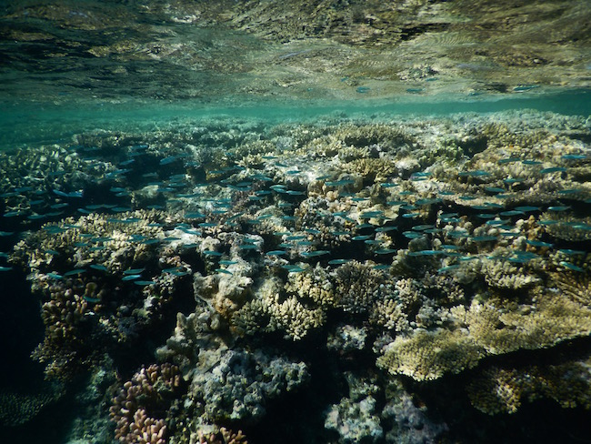 Snorkelling at the Coral Canyons.