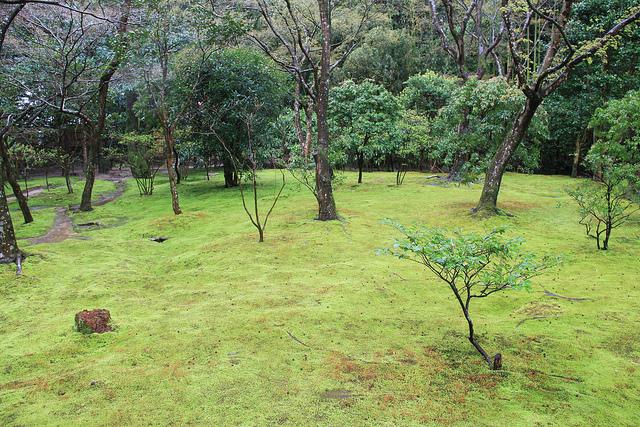 The mose garden.