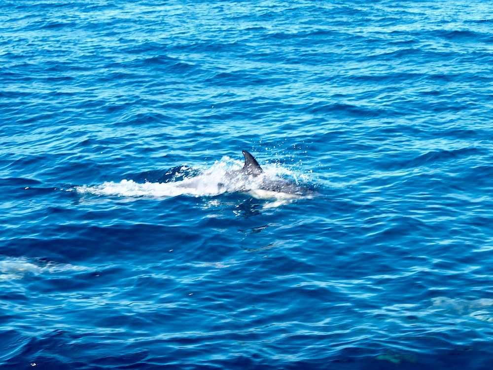 A dolphin swimming near the boat.