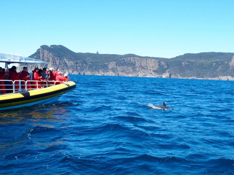 The dolphins were putting on a show near the boat!