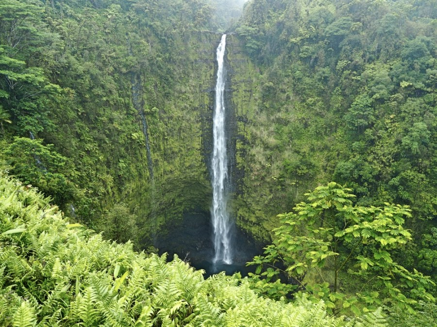 Akaka falls, stunning even in the rain.