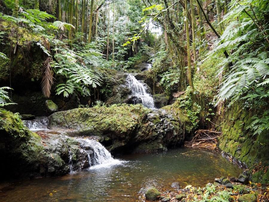 Waterfalls in the garden.