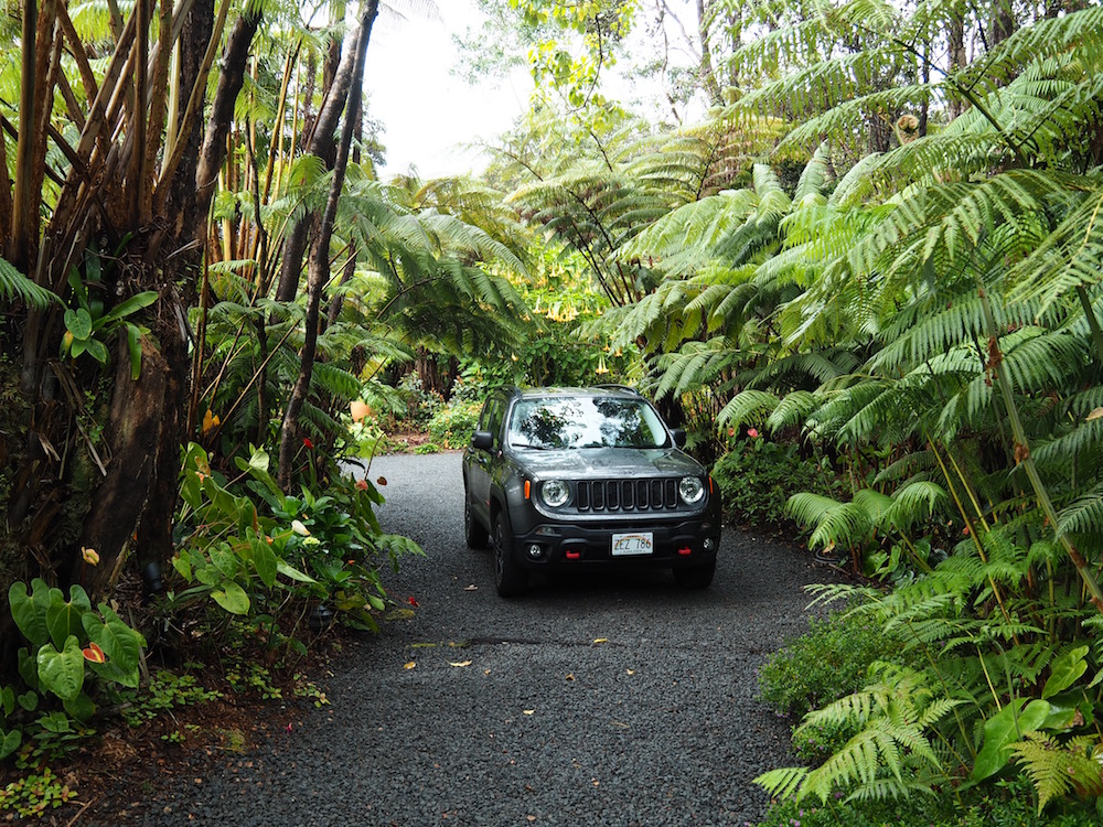 Our parking space amongst the rainforest.