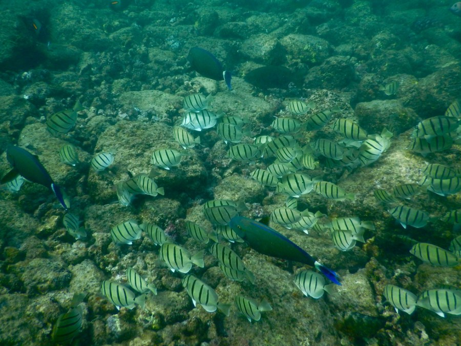 A school of Convict Tang.