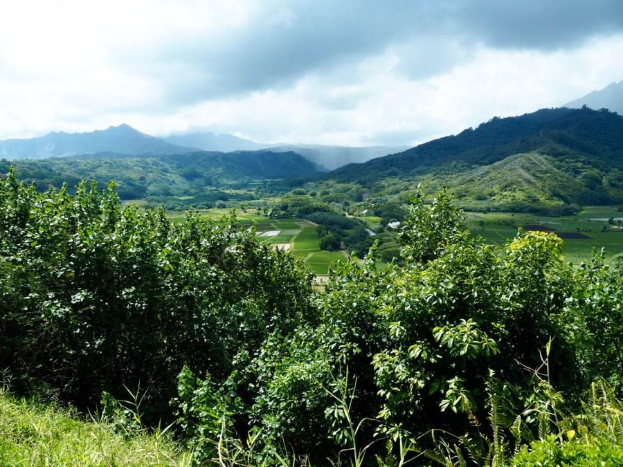 The Hanalei Valley lookout.