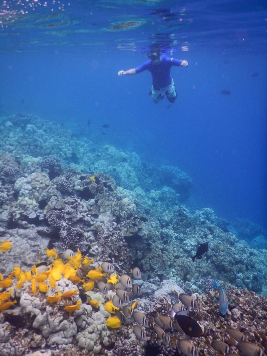 Snorkelling Kealakekua Bay.