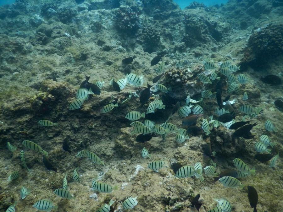 Snorkelling at the Ahihi-Kina'u Natural Area Reserve.