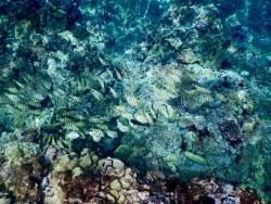 The clear waters of Keawakapu Beach