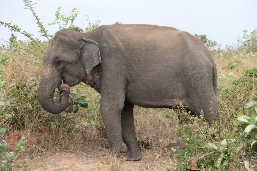 Our first elephant sighting in Udawalawe.