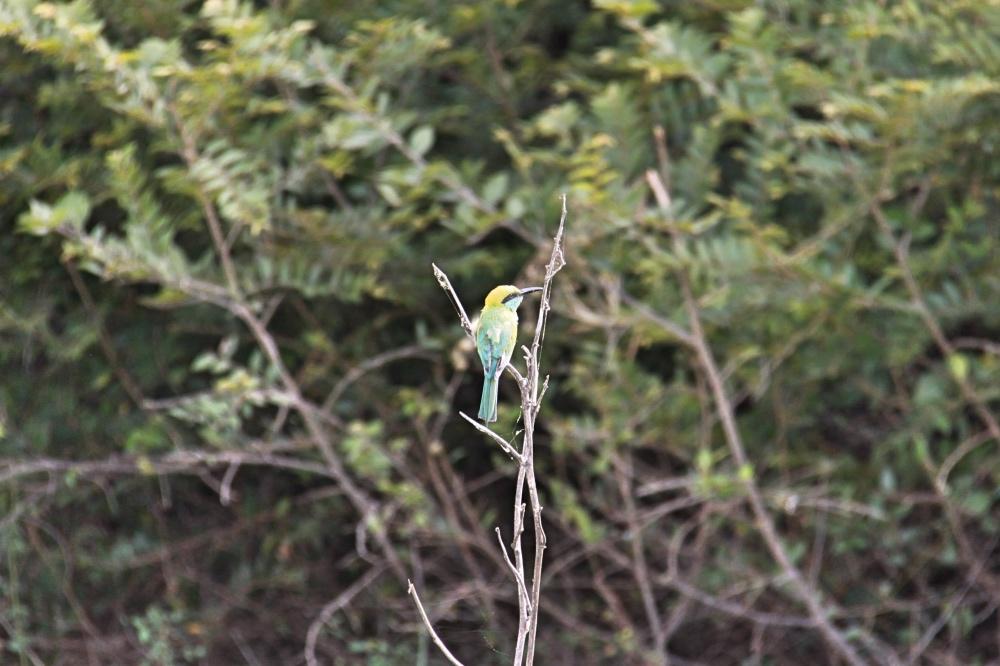 A Kingfisher.