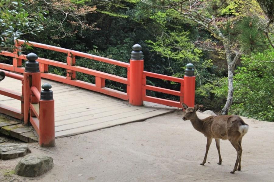 Another deer.