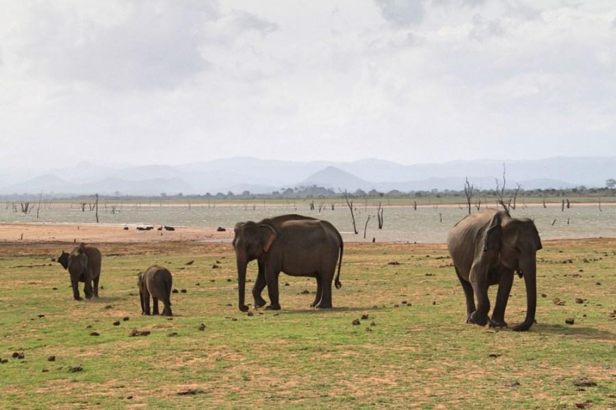 Elephants inside the park.