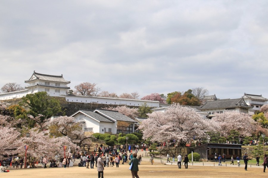 Cherry blossoms near the castle's entrance.