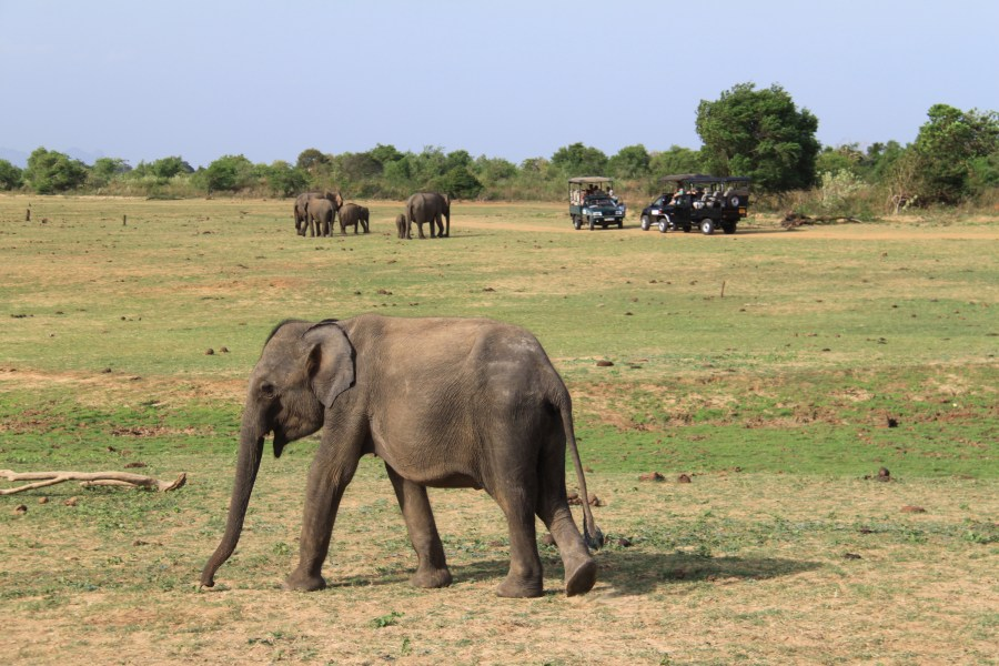 A young elephant in the park.
