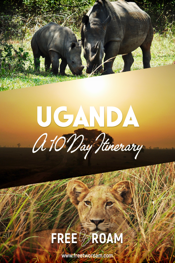 Our 10-day Uganda Itinerary For the Best Wildlife Sightings