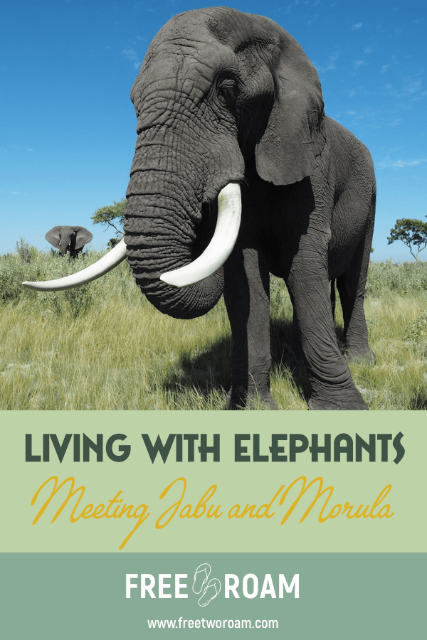 Our Morning with Jabu and Morula at Living With the Elephants