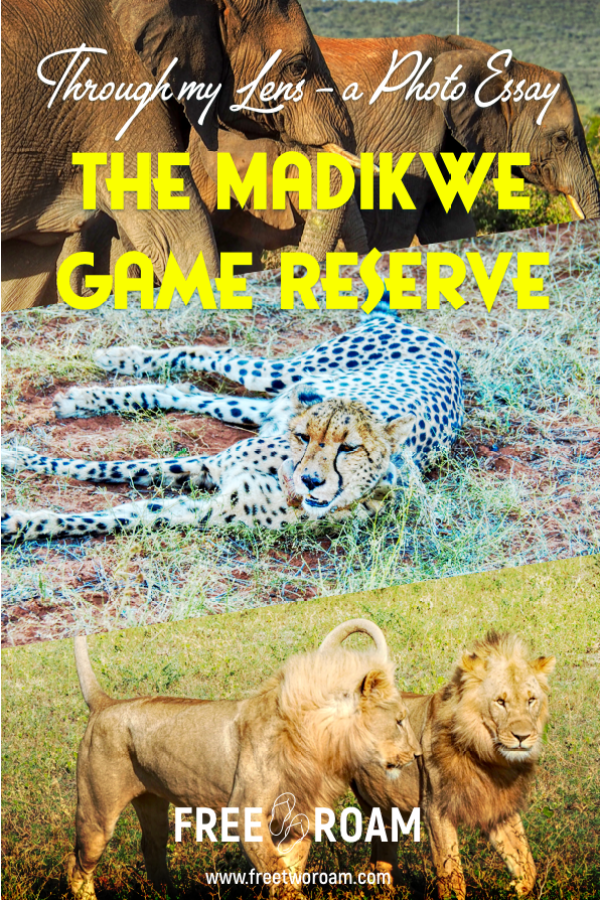 The Madikwe Game Reserve Through My Lens: A Photo Essay