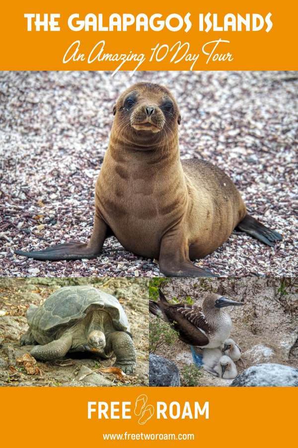 An Amazing 10-Day Tour of the Galapagos Islands with G Adventures