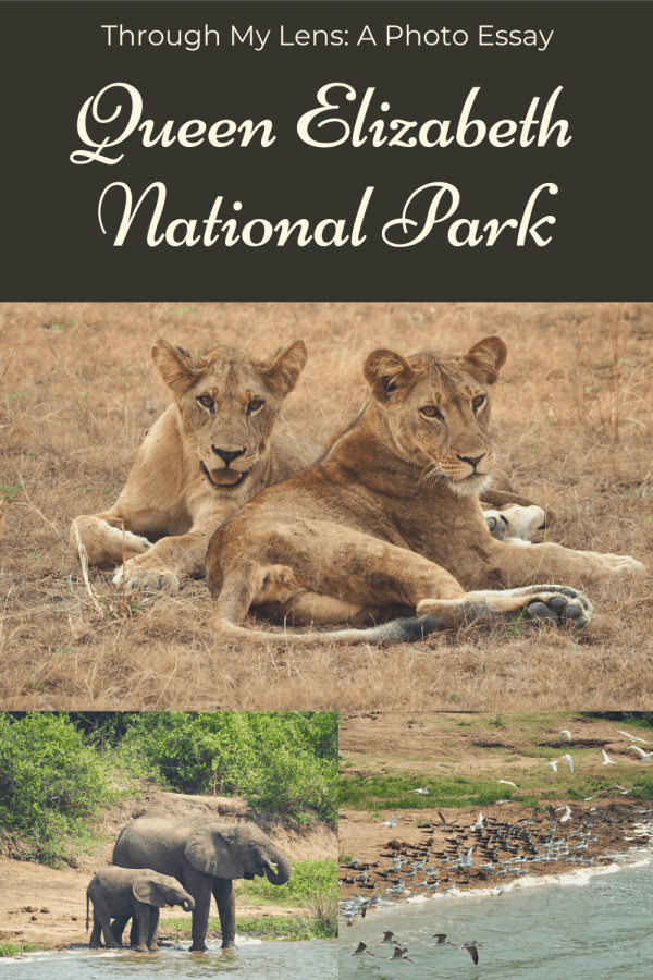 Queen Elizabeth National Park Through My Lens: A Photo Essay