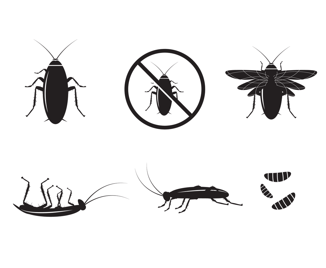 Cockroach Silhouette Vector Vector Art Amp Graphics