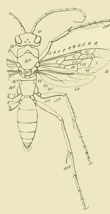 Insect Diagram | Free Vintage Art